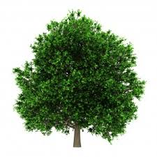 saved by a tree whole times los angeles holistic health
