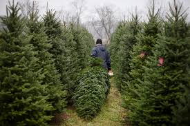 christmas tree farm columbus ohio christmas and accessories