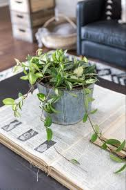 Plants That Need Low Light by Plants Of Season 4 Joanna Gaines Shares Her Fixer Upper Secret