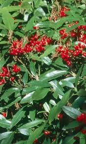 native plants portland oregon 59 best portland gardens u0026 plants images on pinterest portland