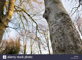 Initials Carved In Tree Carved Graffiti Names And Initials In The Bark Of A Beech Tree