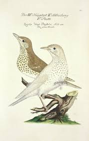 6 best images of antique bird prints vintage art print birds