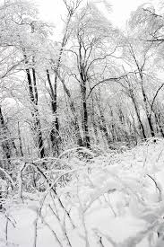 free images tree nature forest branch snow cold black and