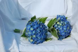 blue wedding bouquets blue wedding bouquets with fresh flowers ipunya