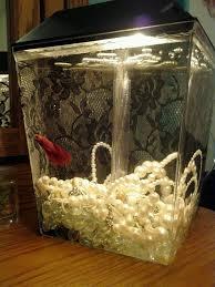 25 unique fish tank ideas on plant fish tank
