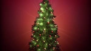 shopping local at christmas tree farms wboc tv 16 delmarvas