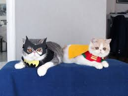 13 ridiculously cute cat halloween costumes