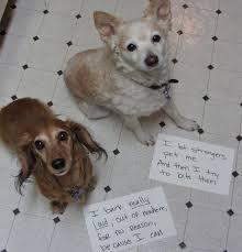 Dog Shaming Meme - file dog shaming jpg wikimedia commons