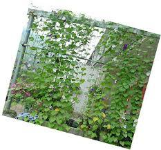 Climbing Plant Supports - amgateeu nylon trellis netting plant support for climbing plants