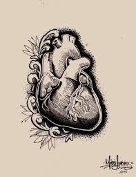 human heart pencil drawing zvfax knowyourliver clip art library