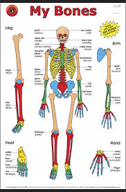 bone structure weight ideal weight for height and bone