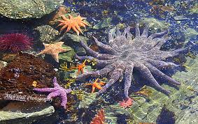 Alaska snorkeling images Baby boomer adventure in alaska snorkeling cruise excursion photo jpg