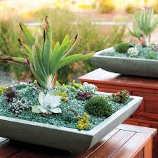 how to grow succulents indoors sunset