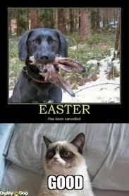 Good Grumpy Cat Meme - tard the grumpy cat good grumpy cat hates easter tags easter