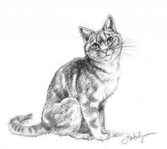 review how to draw cats and kittens a complete guide for