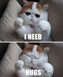 Cat Hug Meme - snoopy hugs snoopy the cat know your meme