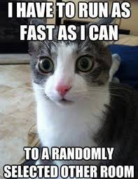 Random Cat Meme - run to a random room meow hole
