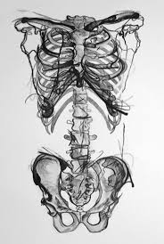 Halloween Skeleton Cut Out by Best 25 Skeleton Drawings Ideas On Pinterest Skeleton Anatomy