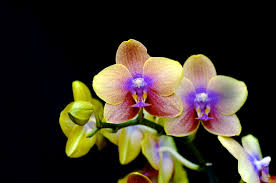 native plants in the amazon rainforest singing orchid discovered in the amazon rainforest