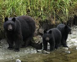 Arkansas Wildlife images Pass the proposal to protect clean water the national wildlife jpg