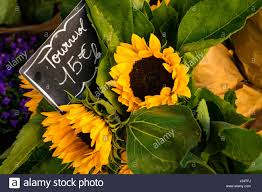 sunflowers for sale yellow sunflowers for sale in flower shop with labels in