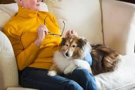 psychiatric service dogs for bipolar disorder