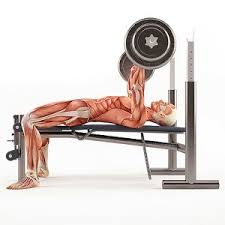How Much To Bench How To Fix Your Weak Bench Press