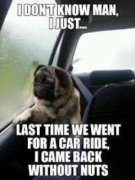 I Don T Know Man Meme - funny pug memes don t know man pug memes pinterest humor