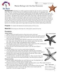 marine biology lab sea star dissection