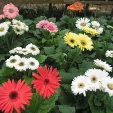 ornamental plants in hyderabad telangana india indiamart