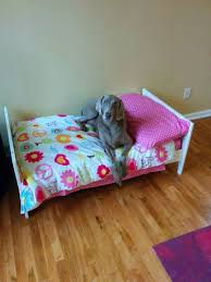 i too bought an ikea bed for my pet a toddler bed for my 80 lb