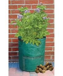 Container Gardening Potatoes - best 25 potato planter ideas on pinterest growing vegetables