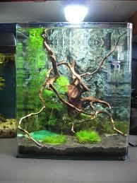 Aquascape Designs For Aquariums 27 Best Tank Ideas Images On Pinterest Aquarium Ideas Aquarium