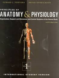 Study Guide Anatomy And Physiology 1 Online Anatomy And Physiology Course Community College Anatomy And