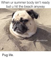 when ur summer body isn t ready but u hit the beach anyway pug life