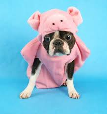 Halloween Costumes Pig 20 Pig Hat Images Pigs Hats Pig Costumes