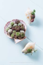199 best indoor succulents images on pinterest indoor succulents