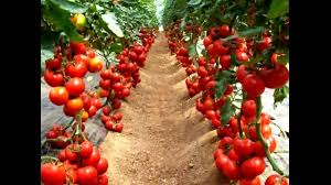 modern vegetable and fruit cultivation youtube