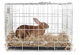 Cool Pets Rabbit Hutch Best Type Of Rabbit Cages Lovetoknow