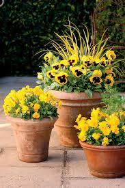 Gardening Pictures Best 25 Fall Container Gardening Ideas On Pinterest Fall