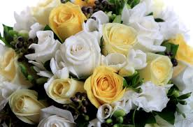 wallpaper roses flowers white yellow flower song beautifully