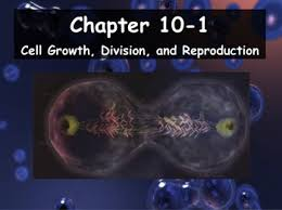 biology 10 1 cell growth division and reproduction powerpoint
