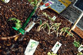How To Plant A Raised Vegetable Garden by How To Build A Raised Veggie Garden In A Weekend U2013 Coloradomoms Com