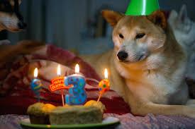 Birthday Cake Dog Meme - dog birthday cake near me hot meme petco rousse bg info