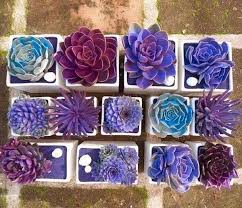 Succulent Gardens Ideas Creative Indoor And Outdoor Succulent Garden Ideas 2017