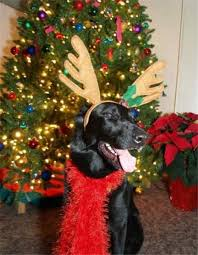 30 best 2013 christmas gifts for pets images on pinterest