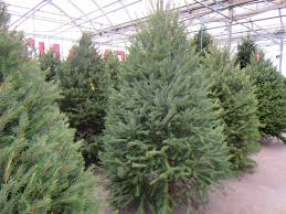 shop inside for christmas trees at goodman u0027s u2013 goodman u0027s farm market