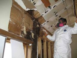 getting rid of mould growth in the bathroom and kitchen mold