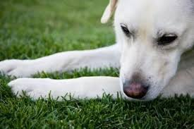 dog cremation how does pet cremation work cremation resource