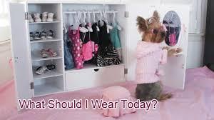 doggie closet funny video of dog chloe polka dot yorkie youtube
